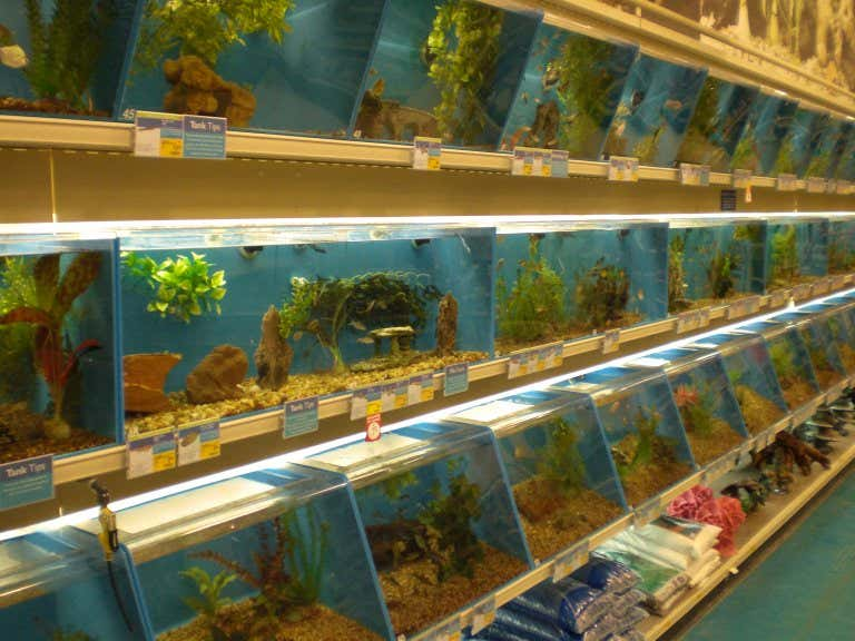 Today in baltimore news man stabs another man in fish for Fish and more pet store