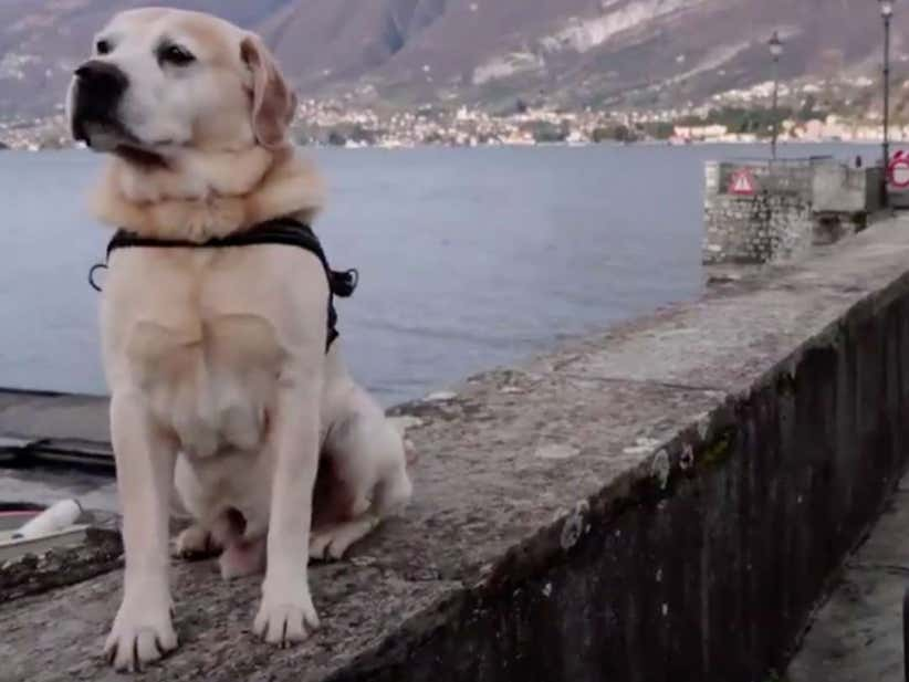 Netflix & Ugly-Cry? New Docu-Series Highlights Our Powerful Connection With Dogs